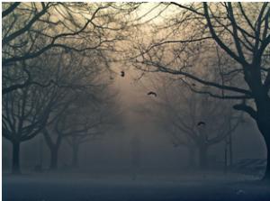 Immagine alberi