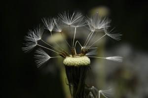 flower-363595_1920