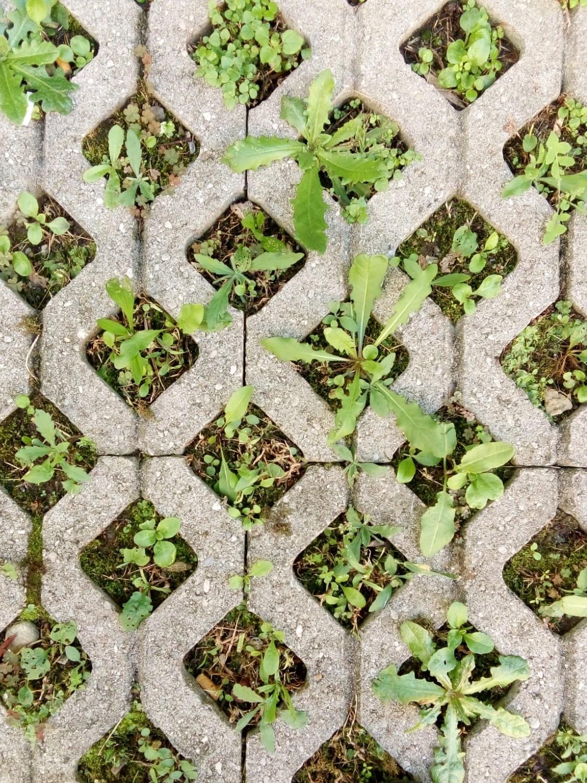 Soluzioni Giardino Delle Parole green week 2019 a milano: giardini e orti conclusi si aprono